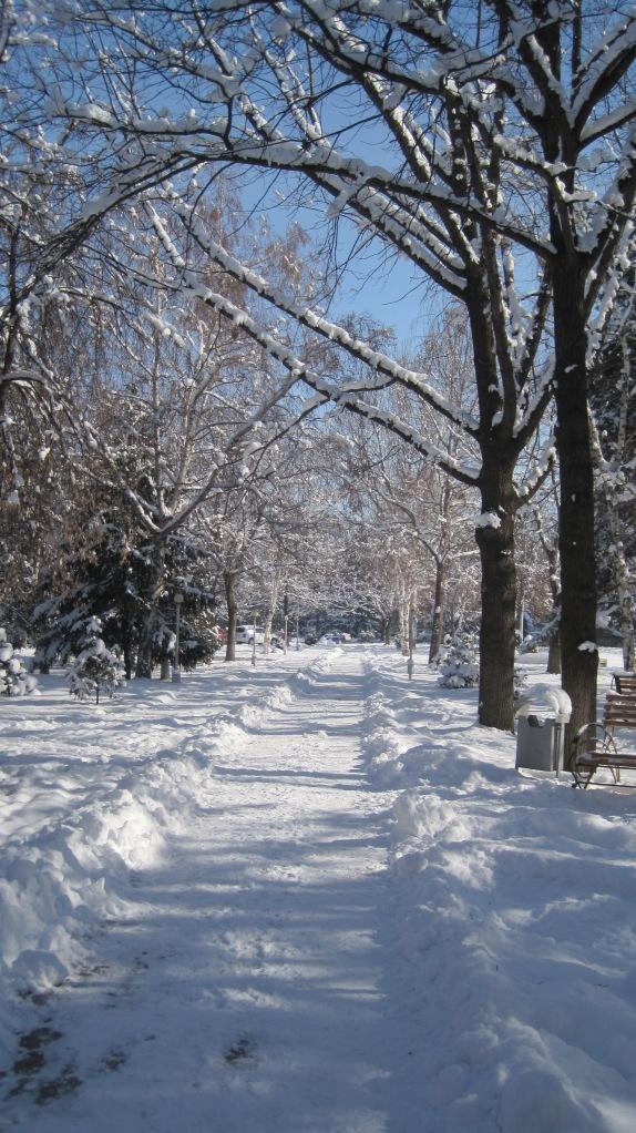 feb 25 walk to work 2